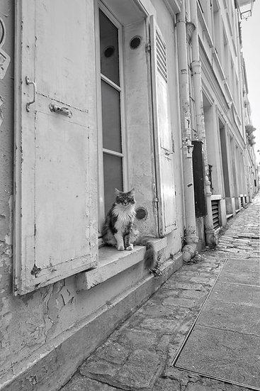 Chat parisien