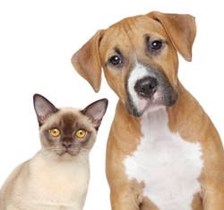 Dog & Cat Food