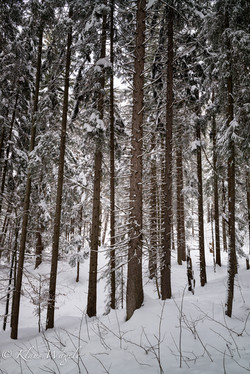 Winter (Bavaria, Germany)