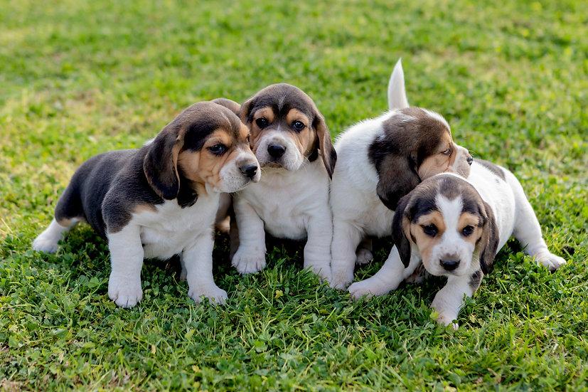 Puppy Head Start Program