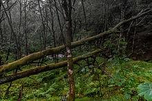 Nedre Årdalen