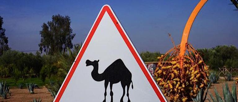 טיול רייזרים אקסלוסיבי במרוקו