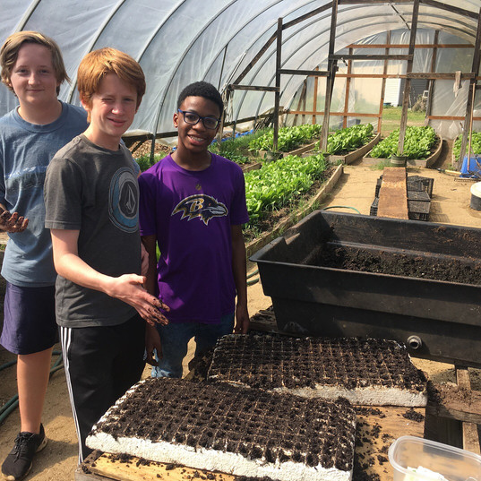 Green House planting