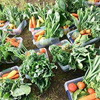 3 Time Delivery - In-school veggie share