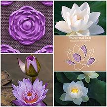 Lotusblume.jpg