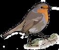 Robin Logo - Right Facing.png