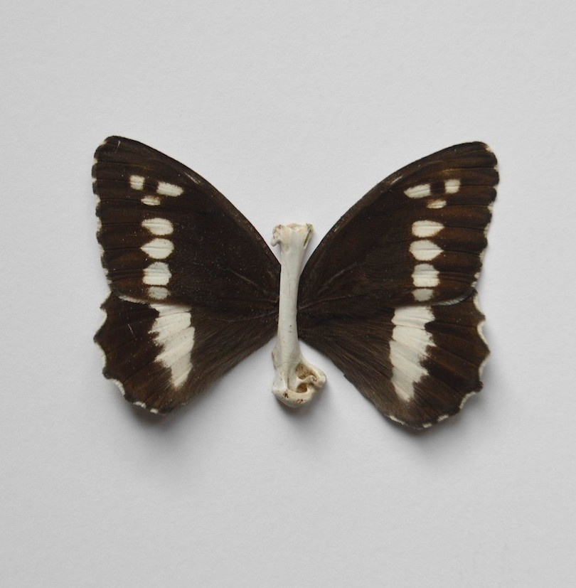 2016 08 19 papallona os_DSC0041.jpg
