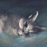 Hornet cat.png