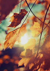 HerbstKulinarium7-2.jpeg