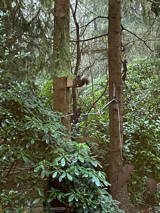 eekhoorn in de tuin Boshuisje Wateren.jp