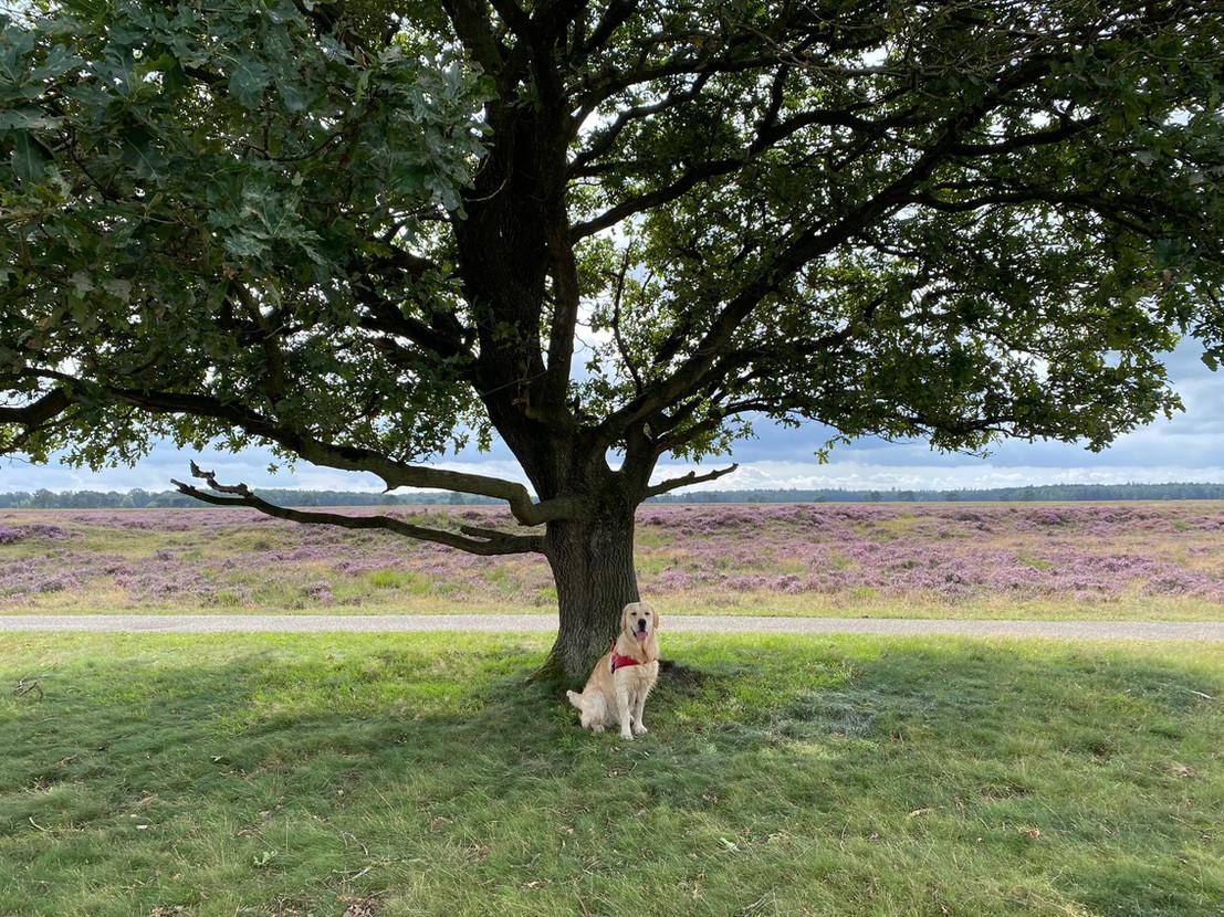 Honden van harte welkom in vakantiehuis Boshuisje Wateren