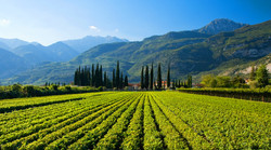 Do You Have Wines from South Italy?