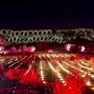 Lights festival.jpg