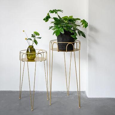 Table CULTURE PLANT