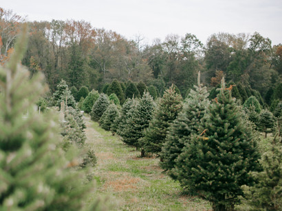 Interior Sourcing: How to dress a Christmas tree like a professional