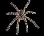 Arañas-removebg-preview.png