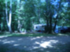 heavily wooded campsite