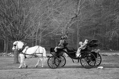 Bride and Groom ride in a carriage into the woods in a black and white photo.