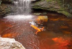 Cachoeira do Café - Entorno _ Reserva Ra