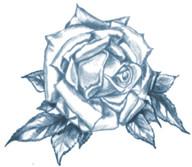 Flo_Rose_Black.jpg