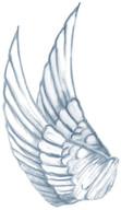 WingsAngel2.jpg