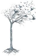 Tree_BareBirdsPine.jpg