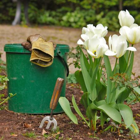 Garten Im Frühjahr - So Machen Sie Ihn Frühlingsfit