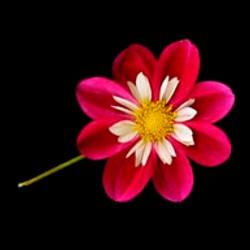 Flower 1/5