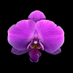 Orchid 1/5