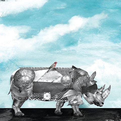 Protecting the Rhinos