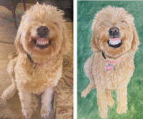 Lacy before and after