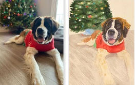 Holly before and after