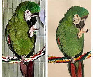 Goobie before and after