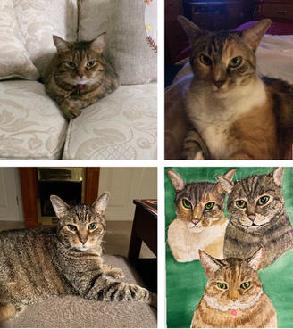 Three Cats before and after