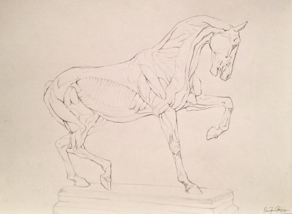 Ecorche Horse