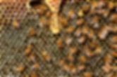 queen-cup-337695_960_720.jpg