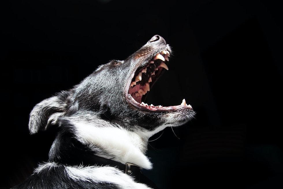 animal-dog-pet-dangerous-2238.jpg