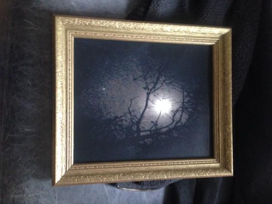 Night Branches