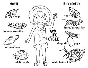 life cycle coloring page.jpg