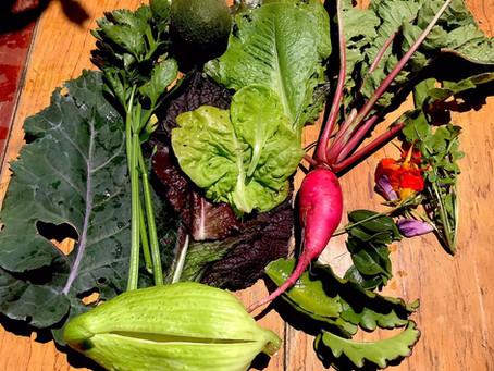 Voluntariado | Agroecología | Lima