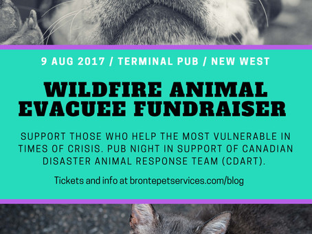Fundraiser for Wildfire Animal Evacuees