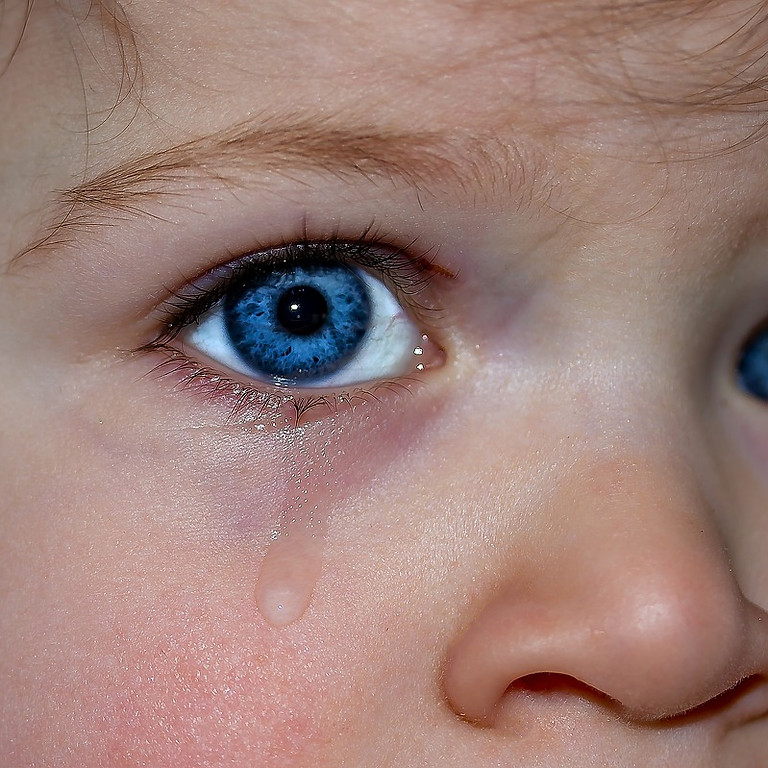 Brain Development and the Impact of Trauma - Mindful Education - Berowra