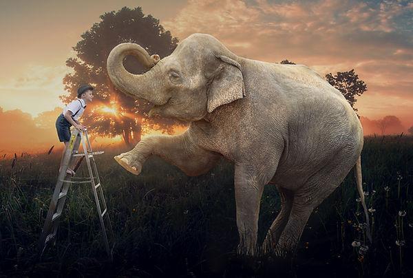 elephantnoses.jpg