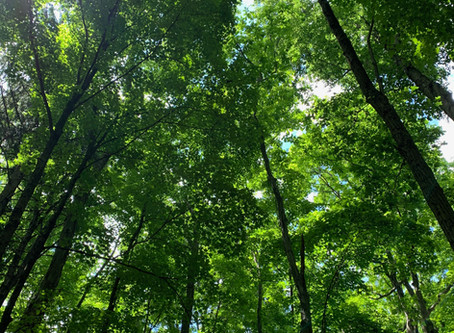 Nature, Our Teacher