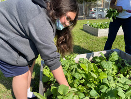 Identifying and Categorizing Garden Crops