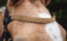 Sovereign Gold BrowBand1.jpg