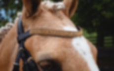 Sovereign Gold BrowBand2.jpg