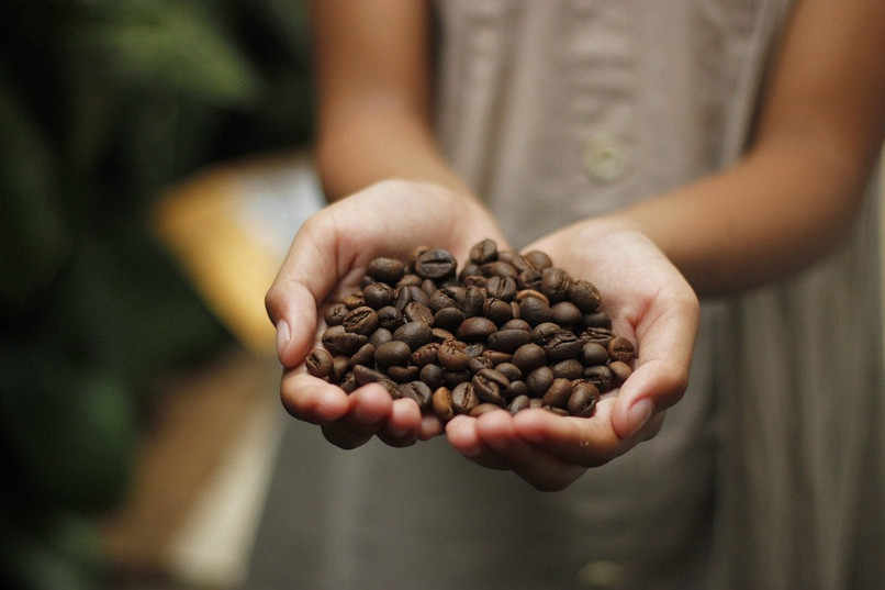 coffee beans in a persons palm 1