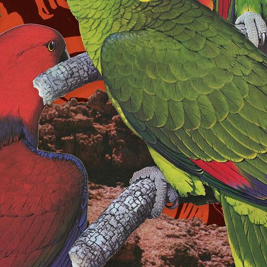 birdsofafeather_art1.jpg