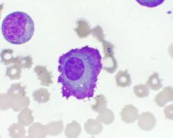 Cytology at VetPath Services